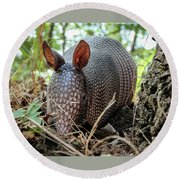 Armadillo In The Woods Round Beach Towel