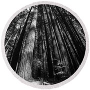 Armstrong National Park Redwoods Filtered Sun Black And White Round Beach Towel