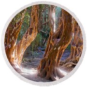 Arrayanes Grove On Trail In Arrayanes National Park Near Bariloche-argentina Round Beach Towel