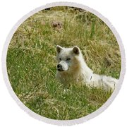 Artic Wolf 2 Dry Brushed Round Beach Towel