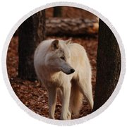 Artic Wolf Round Beach Towel