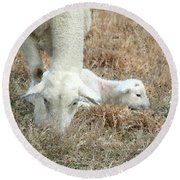 L Is For Lamb Round Beach Towel