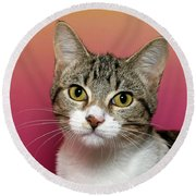 Life Is Better With A Cat Round Beach Towel