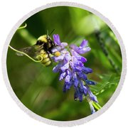 Bumblebee On A Blue Giant Hyssop Round Beach Towel