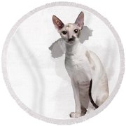 Beautiful Two-color Eyes Cornish Rex Round Beach Towel