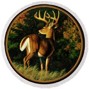 Whitetail Buck - Indecision Round Beach Towel by Crista Forest