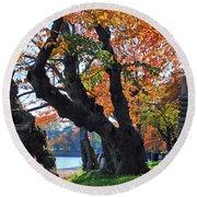 Asian Cherry Trees Of Fall Round Beach Towel