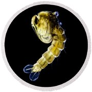 Asian Tiger Mosquito Pupa Round Beach Towel
