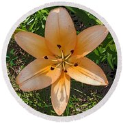 Asiatic Lily With Poster Edges Round Beach Towel