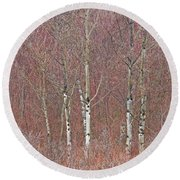 Aspen And Buckbrush Round Beach Towel