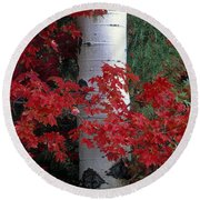 Aspen And Mountain Maple Round Beach Towel