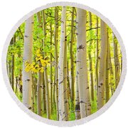 Aspen Tree Forest Autumn Time Portrait Round Beach Towel