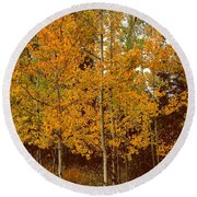 Aspen Trees With Autumn Leaves  Round Beach Towel
