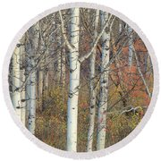 Aspens At Dusk Round Beach Towel
