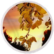 Aspens At Sunset Round Beach Towel