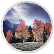 Aspens In Autumn Light Round Beach Towel