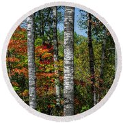 Aspens In Fall Forest Round Beach Towel