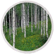 Aspens In Spring Round Beach Towel
