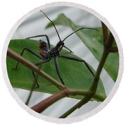 Assassin Bug Round Beach Towel
