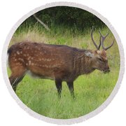 Assateague Sitka Deer Round Beach Towel