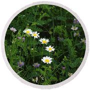 Aster And Daisies Round Beach Towel