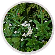 Asters And Fringed Grass-of-parnassus And Red Monkeyflowers On Highline Trail In Glacier National Pa Round Beach Towel