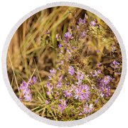 Asters In Autumn Round Beach Towel