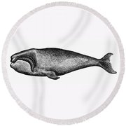 Atlantic Right Whale Round Beach Towel