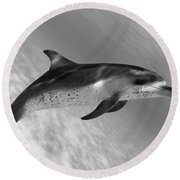 Atlantic Spotted Dolphin Round Beach Towel