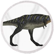 Aucasaurus Dinosaur Isolated On White Round Beach Towel