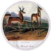 Audubon: Antelope, 1846 Round Beach Towel