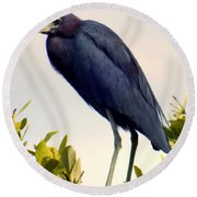 Audubon Blue Round Beach Towel