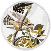 Audubon: Hawk Round Beach Towel