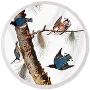Audubon: Nuthatch Round Beach Towel