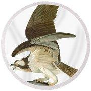 Audubon: Osprey Round Beach Towel