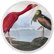 Audubon: Scarlet Ibis Round Beach Towel
