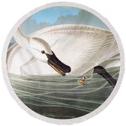 Audubon: Trumpeter Swan Round Beach Towel