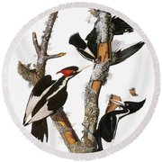 Audubon: Woodpecker Round Beach Towel