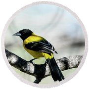 Audubon's Oriole Back Wings Round Beach Towel