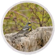 Audubon's Yellow Rumped Warbler Round Beach Towel