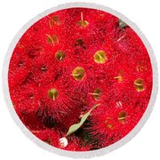 Australian Native Eucalyptus Flowers Round Beach Towel