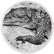 Australian Shy Crocodile  Round Beach Towel