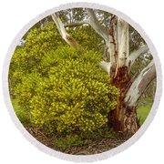 Australian Wattles Bush And Candlebark Gum Tree Round Beach Towel
