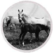 Austria: Horse Farm Round Beach Towel