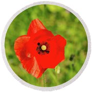 Austrian Poppy Round Beach Towel