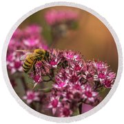 Autumn Bee On Flowers Round Beach Towel