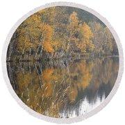 Autumn Birches On The Shore Of Lake Round Beach Towel