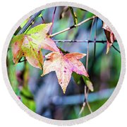 Autumn Color Changing Leaves On A Tree Branch Round Beach Towel