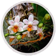 Autumn Colored Orchids Round Beach Towel