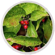 Autumn Dogwood Berries Round Beach Towel
